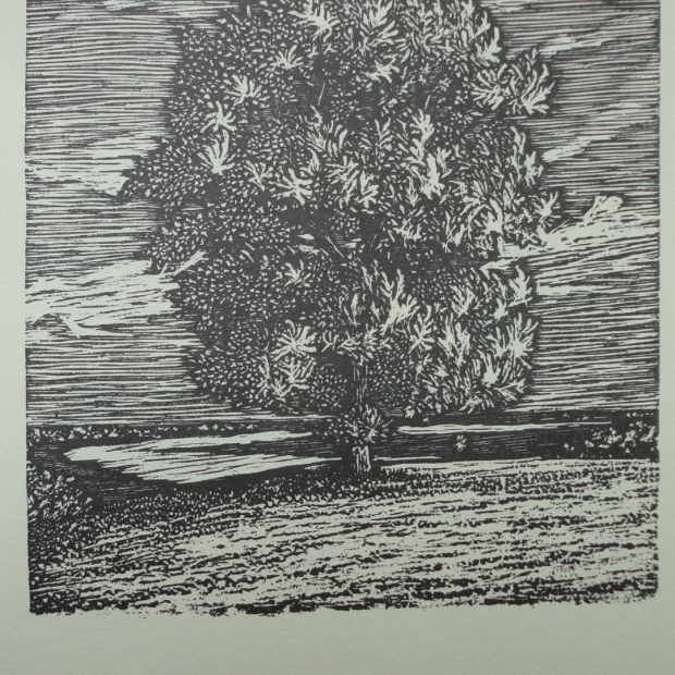 Oak Tree 1984 Wood Engraving